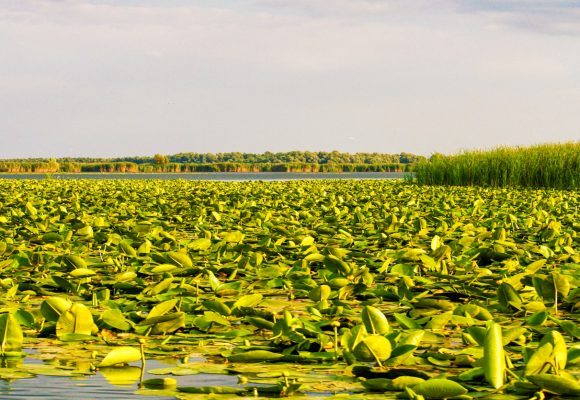 Descopera Delta Dunarii