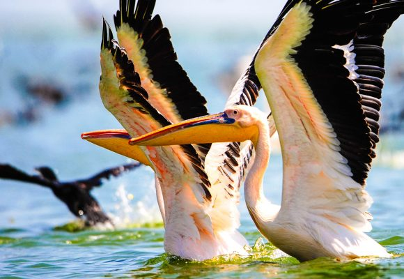 Program Birdwatching